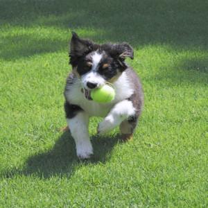 dogplay1