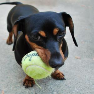 dogplay2