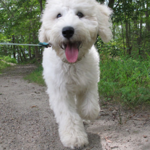 dogplay3
