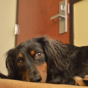 hoteldog4